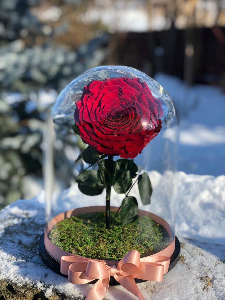 Trandafir criogenat mare